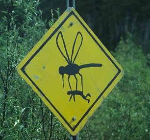 gmomosquito.png
